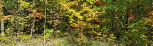 Autumn Equinox Crystals