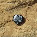 Chrysanthemum Stone Heart